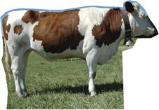 Cow Side Cardboard Cutout Standup Prop