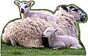 Lamb Family Laying Cardboard Cutout Standup Prop