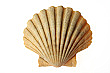 Sea Shell Cardboard Cutout Standup Prop